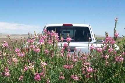 Faq Planting Guide Bighorn Sainfoin Seed Co Susan George